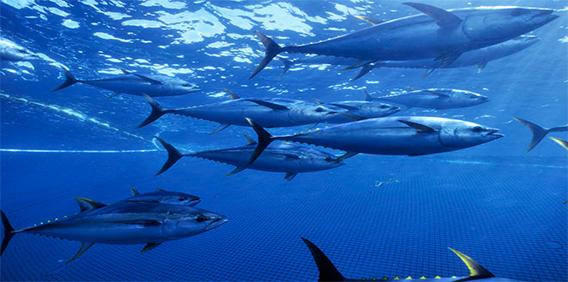 Ocean Perishable
